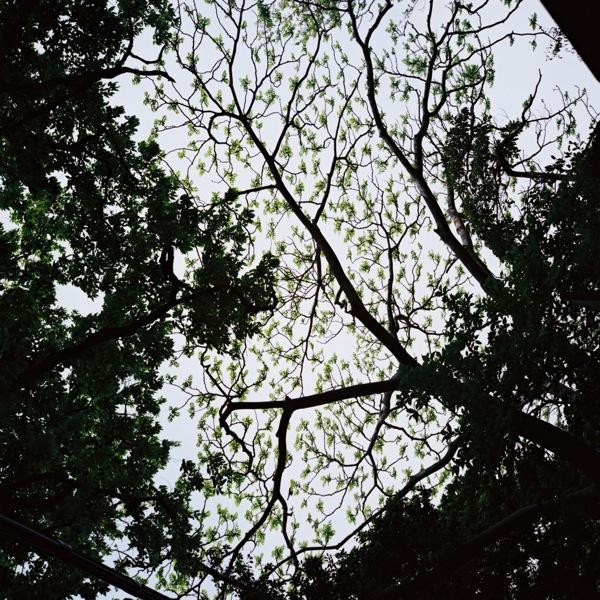 Rolleiflex_077.jpg